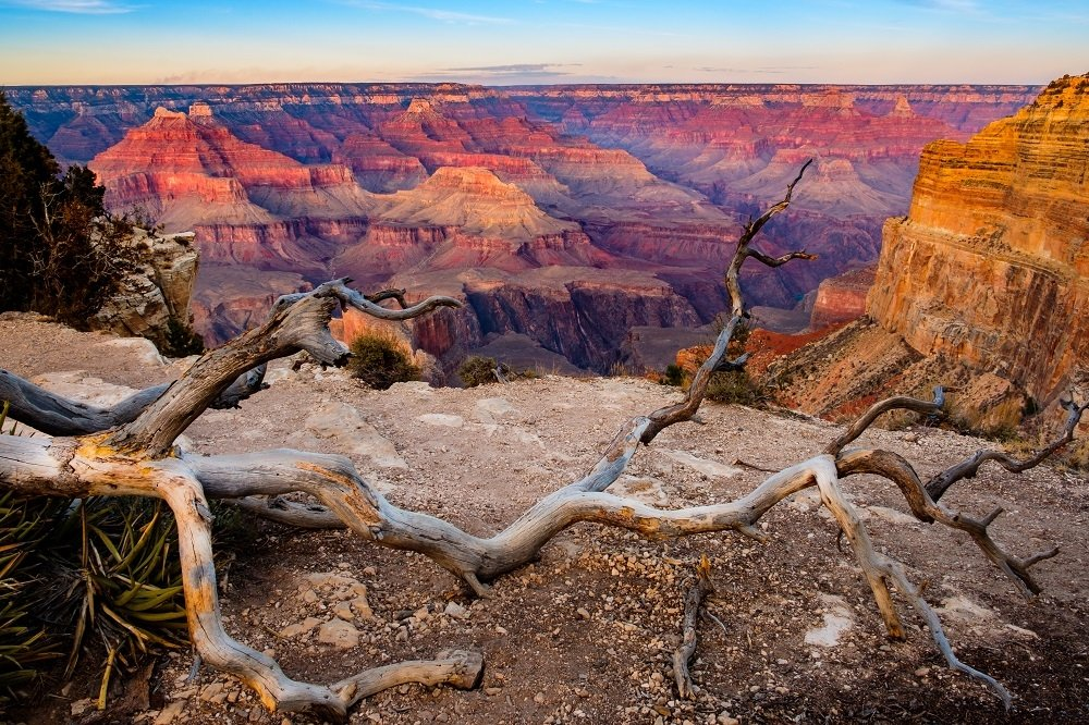 Grand canyon sunset landscape with dry tree foreground, USA